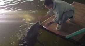 Удалось спасти Дельфинов из силосной ямы
