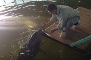 в россии спасли дельфинов